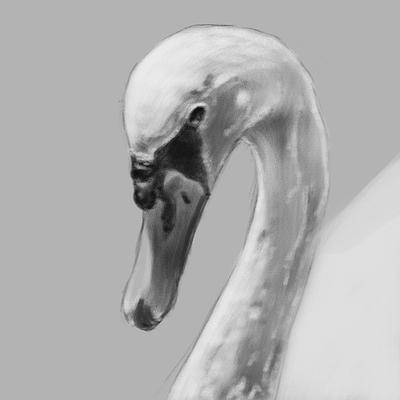 swan-painting-bnw