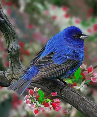 Nilgiri_Flycatcher