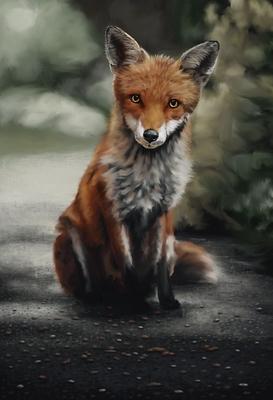 20200112 - fox - 5) day 3