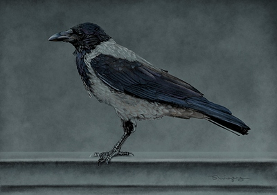 Finished-hooded-crow-small