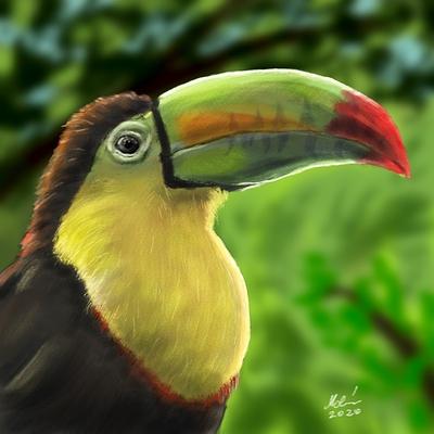 keel-billed-toucan-painting