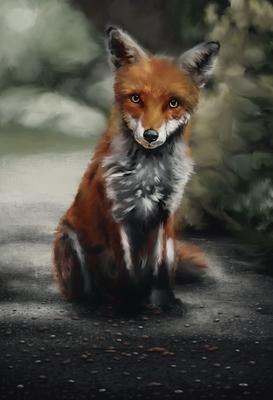 20200112 - fox - 4) day 2