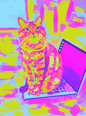 20.11.18 Cat on the laptop