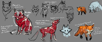 fox_studies