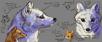 fox_studies2