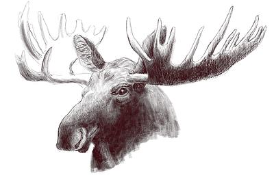 moose_study_1