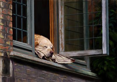 dog_window
